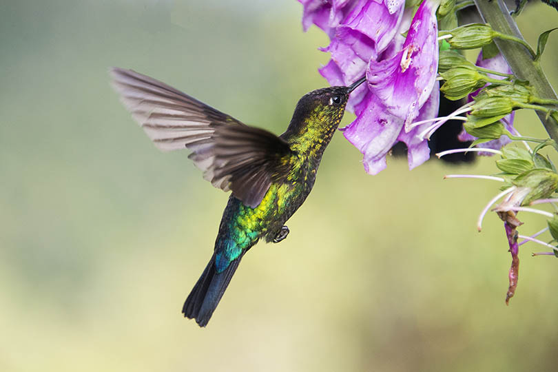 5. Birds
