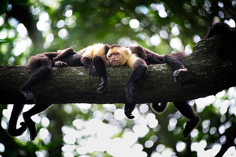 2. Monkeys