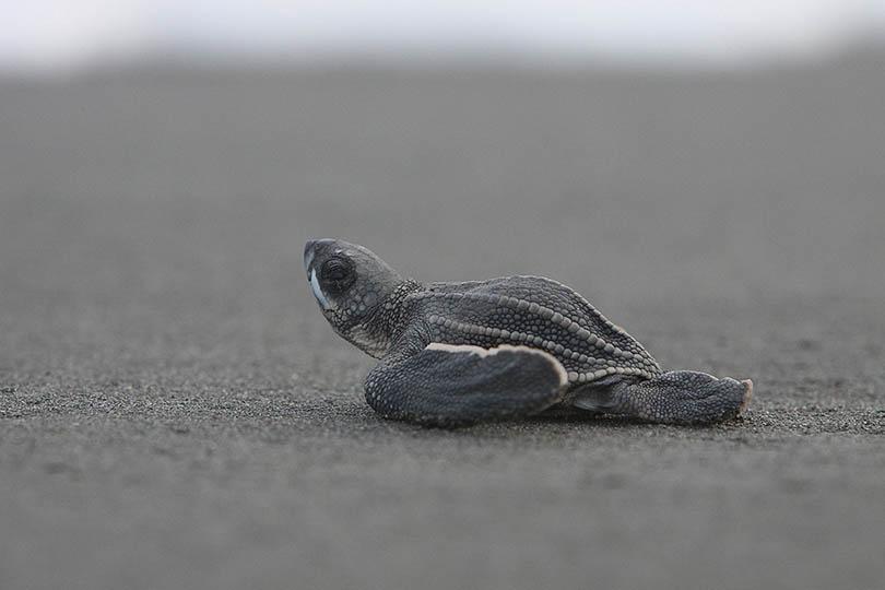 4. Turtles