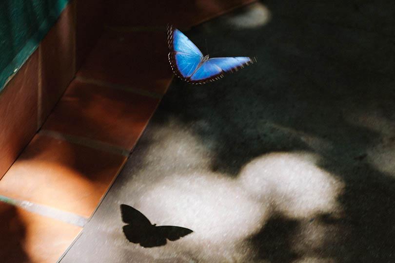 6. Butterflies
