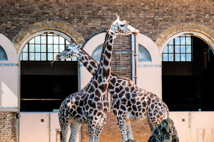 Zoos in England will be allowed to reopen from 15 June (Credit: Richard Cook / Unsplash)