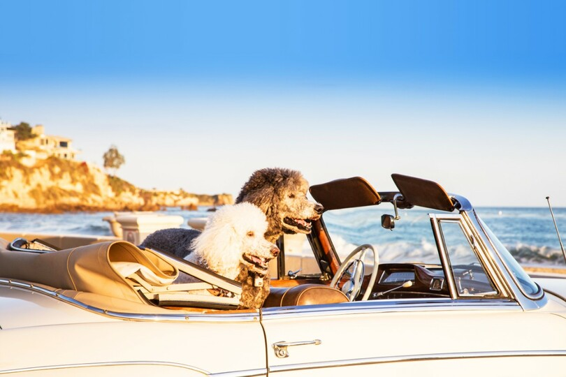 Dog-loving agents can make their passion for pooches pay with PetsPyjamas