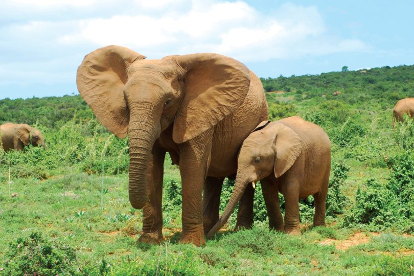 Intrepid launches animal welfare policy toolkit for travel
