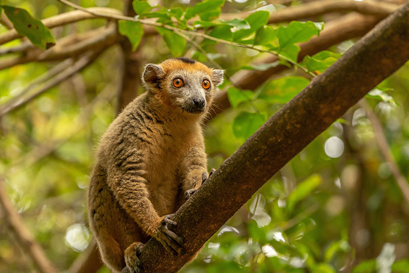 Madagascar is a new product development for Luxtripper (image: Hans-Jurgen Mager, Unsplash)
