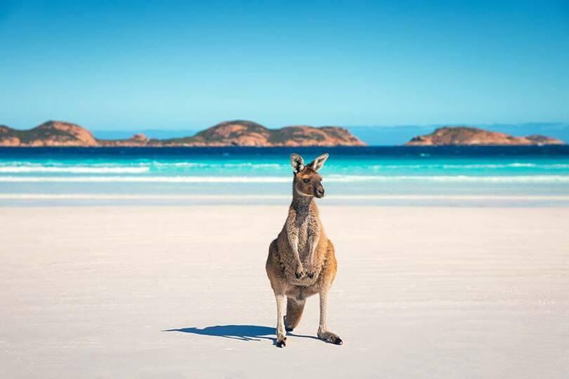 Tourism Australia relaunches trade training programme