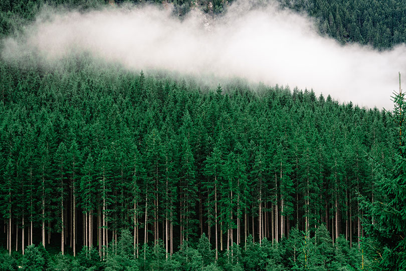 Ultima Collection aims to plant 10,000 trees