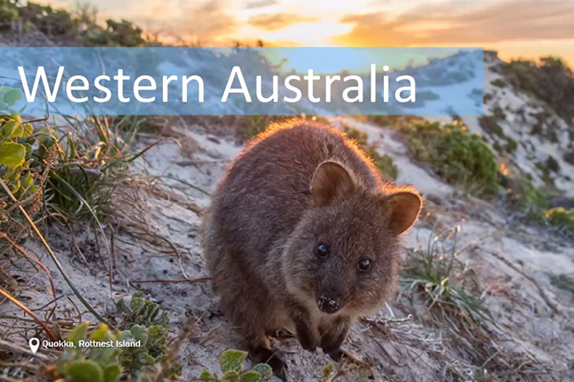 Quokkas make an appearance in the Western Australia session