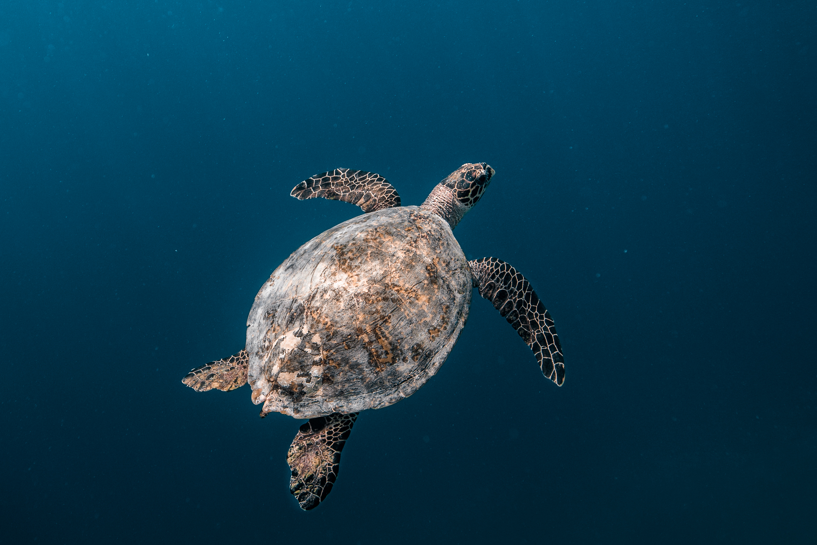 Hawksbill turtles could be among those to benefit (Credit: Mohamed Rizhan)
