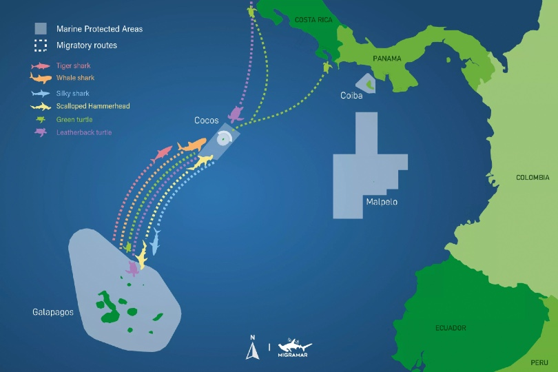 Galapagos-Cocos Swimway is a key migration route for marine life