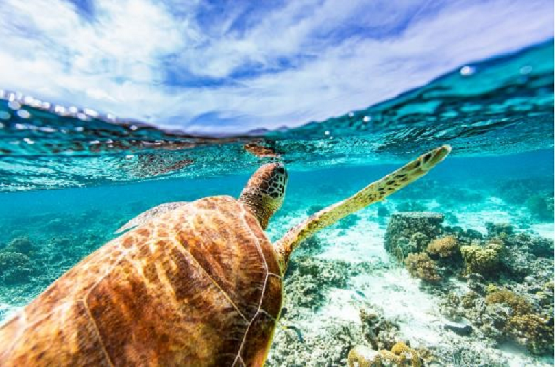 Sandals launches World Ocean Day initiatives
