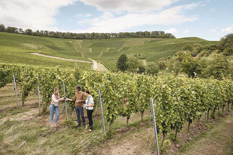 Win wine, Schnapps and cooking-related goodies with SouthWest Germany