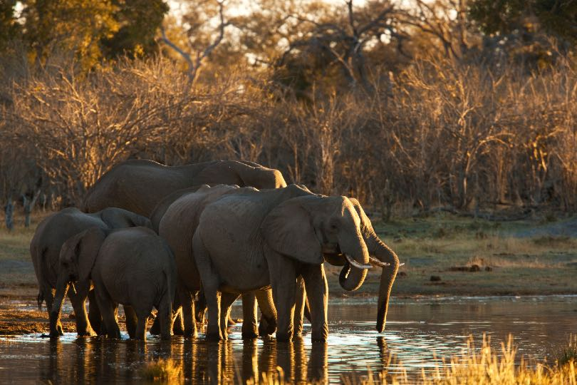 Great Plains launches mobile safari and new camp