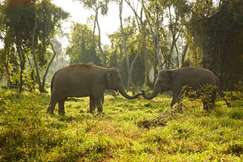 Anantara launches fitness challenge to support wildlife rangers